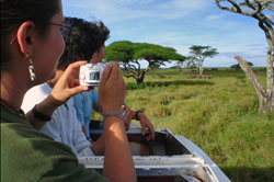 Photographing a herd of Elephants from a minivan in Tanzanian game park
