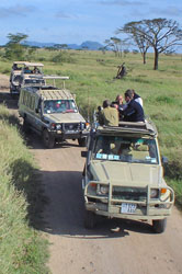 Jeeps and photographers in Tanzanian game park)