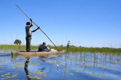 Boatman poles his mokoro canoe through the Okavango Swamps
