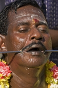 Thaipusam pilgrim with skewer through his cheek