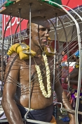 Devotee has his flesh pierced with spears to honour Lord Murugan