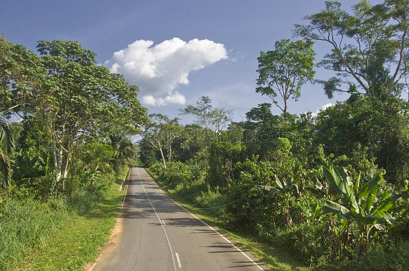 A modern asphalt road cuts through the dense and verdant jungle of trees and bushes.