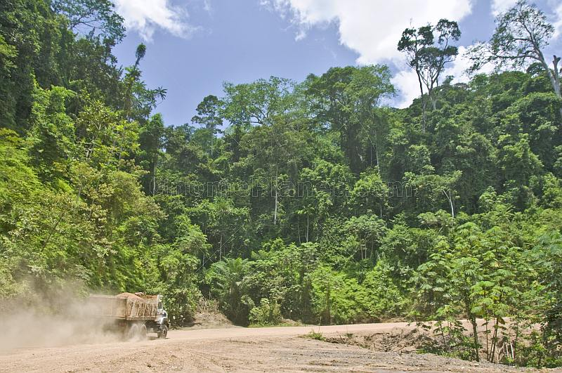 A gravel-filled truck drives on a dusty logging road through dense jungle forest.