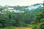 Cloud hugs the jungle canopy and sinks into the African rain forest.