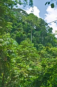 Dense jungle undergrowth and trees in Lope National Park.