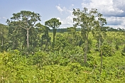 A mix of forested jungle and open savannah grasslands under blue sky with clouds.
