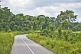 Image of A stretch of modern tarmacadam road snakes through the thickly forested jungle.