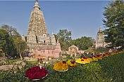 Floral tributes to the Buddha left by pilgrims visiting the Mahabodhi Temple.