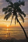 caption: A young couple walk along the beach at sunset, framed by a coconut palm tree.