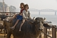 Image of Indian girl and boy riding a buffalo, on the banks of the Ganga River.