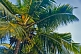 Image of Closeup of coconut palm tree.