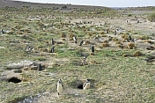 Penguin burrows at the Penguin Colony on the Bahia Camarones.