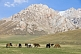 Image of Horses grazing the sparce grass of the At-Bashy Range, on the road to the Torugart Pass to China.