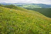 A flower-filled meadow on a mountain top overlooking green and forested valleys.
