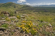 A flowery mountaintop vantage point looks over forested valleys and the Khorgo Uul volcano caldera.
