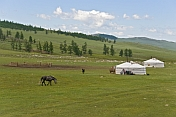 A group of yurts in a forested mountain valley, with horse and Tibetan Mastiff dog.