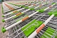Image of Lines of stainless steel shopping trolleys outside Globus, a modern Russian supermarket.