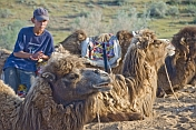 Uzbek camel driver waits with his Bactrian Camel charges.