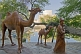 Image of Statues of nomad and camels in front of the Lyabi Hauz pool.