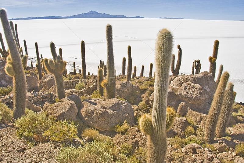 View over the Uyuni Salt Flats from the Isla Pescado.