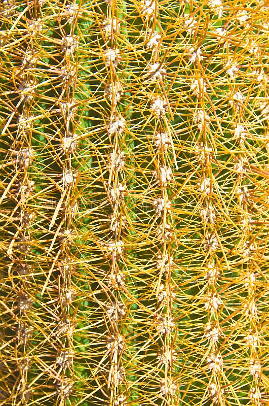 Cactus closeup on the Isla Pescado in the Uyuni Salt Flats.