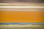Flamingoes graze in the colorful Laguna Colorada salt lake.