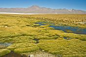 Moss banks next to the Laguna Colorada salt lake.