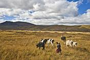 Children look after grazing cattle in hilly grassland.