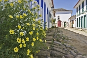 Plants grow outside colorful colonial house on empty cobbled street.