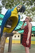 Girl use a macaw-shaped telephone booth.