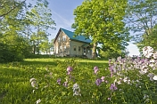 Farmhouse in wooded glade bordered by purple flowers.