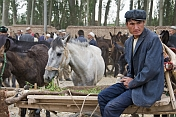 A horse trader waits with his horses at the Sunday Market.