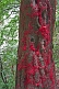 Image of Tree with red lucky threads at the Kongtong Shan Monastery, near Pingliang.