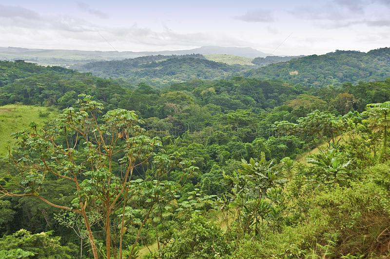 Looking over a vista of the densely forest jungles of the Congo.