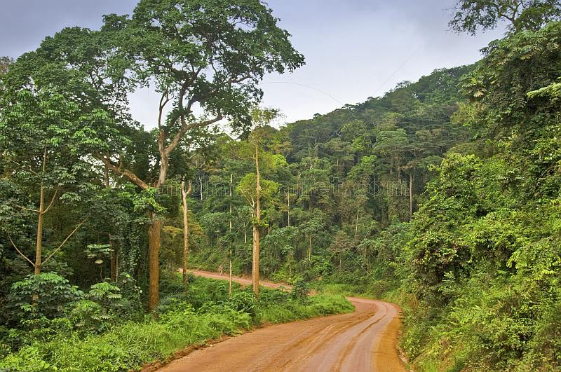 A dusty logging road snakes through the densely forested jungle.