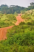 A dusty logging road snakes through recently cleared jungle.