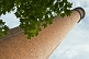 Image of Brick industrial mill chimney with sycamore tree.